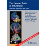 The Human Brain in 1, 492 Pieces Structure, Vasculature and Tracts