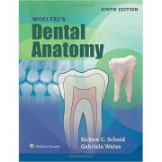 Woelfels Dental Anatomy